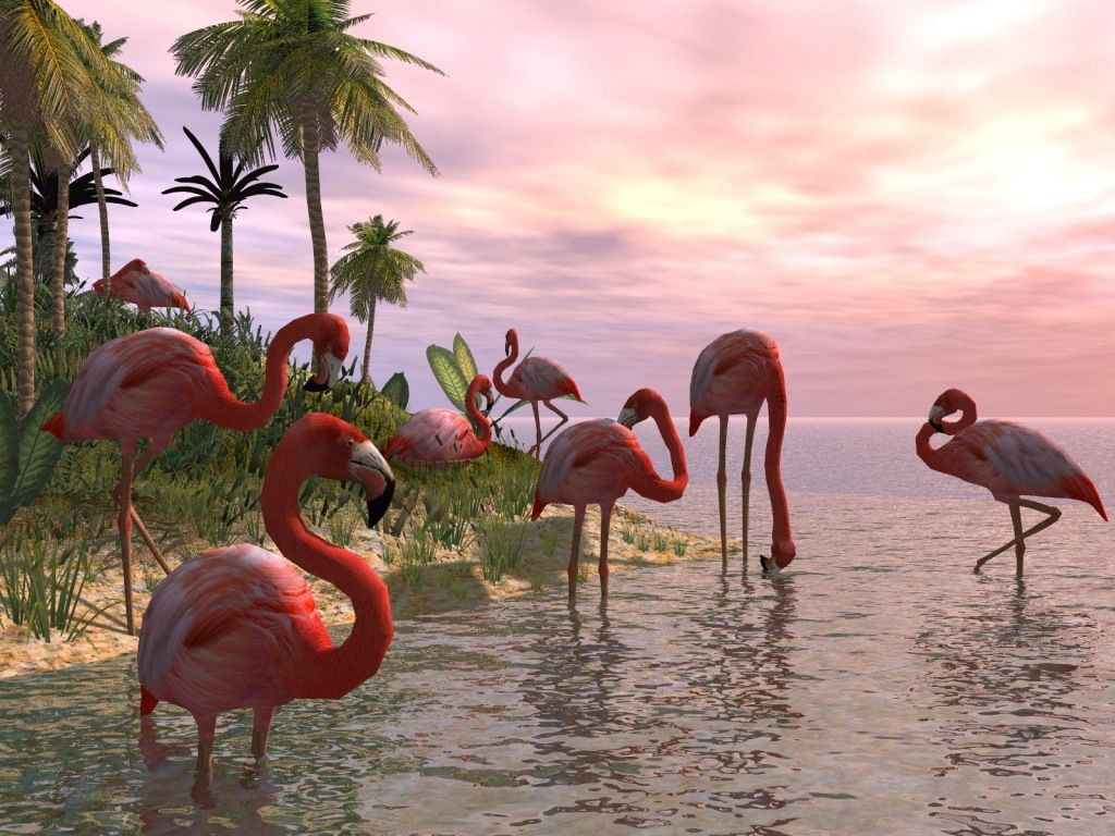 My Flamingo Desktop Wallpaper (I've been using this for at