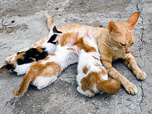 The Best Age For Taming Feral Kittens Feral Kittens Kitten Adoption Kittens