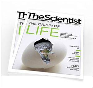 Controlling Bee Fate | The Scientist Magazine®