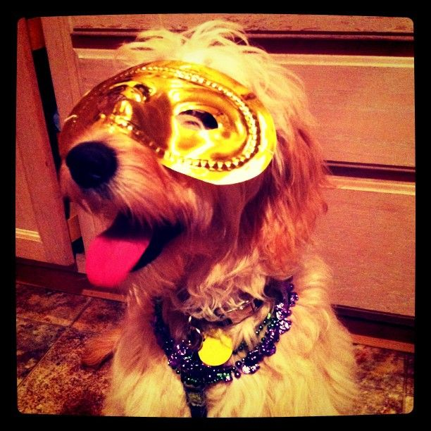 Mardi Gras Brimley!!!