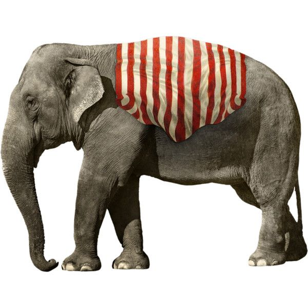 Eenascreation Circus El53 Png Found On Polyvore Circus Elephant Elephant Elephant Illustration