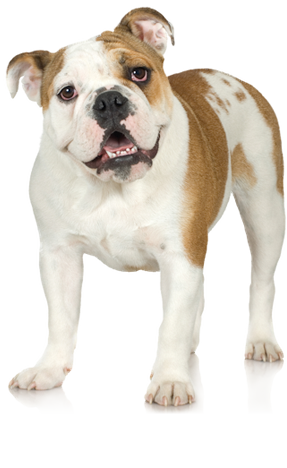 Dog Breed Questionnaire : Dog Breed Selector : Animal Planet
