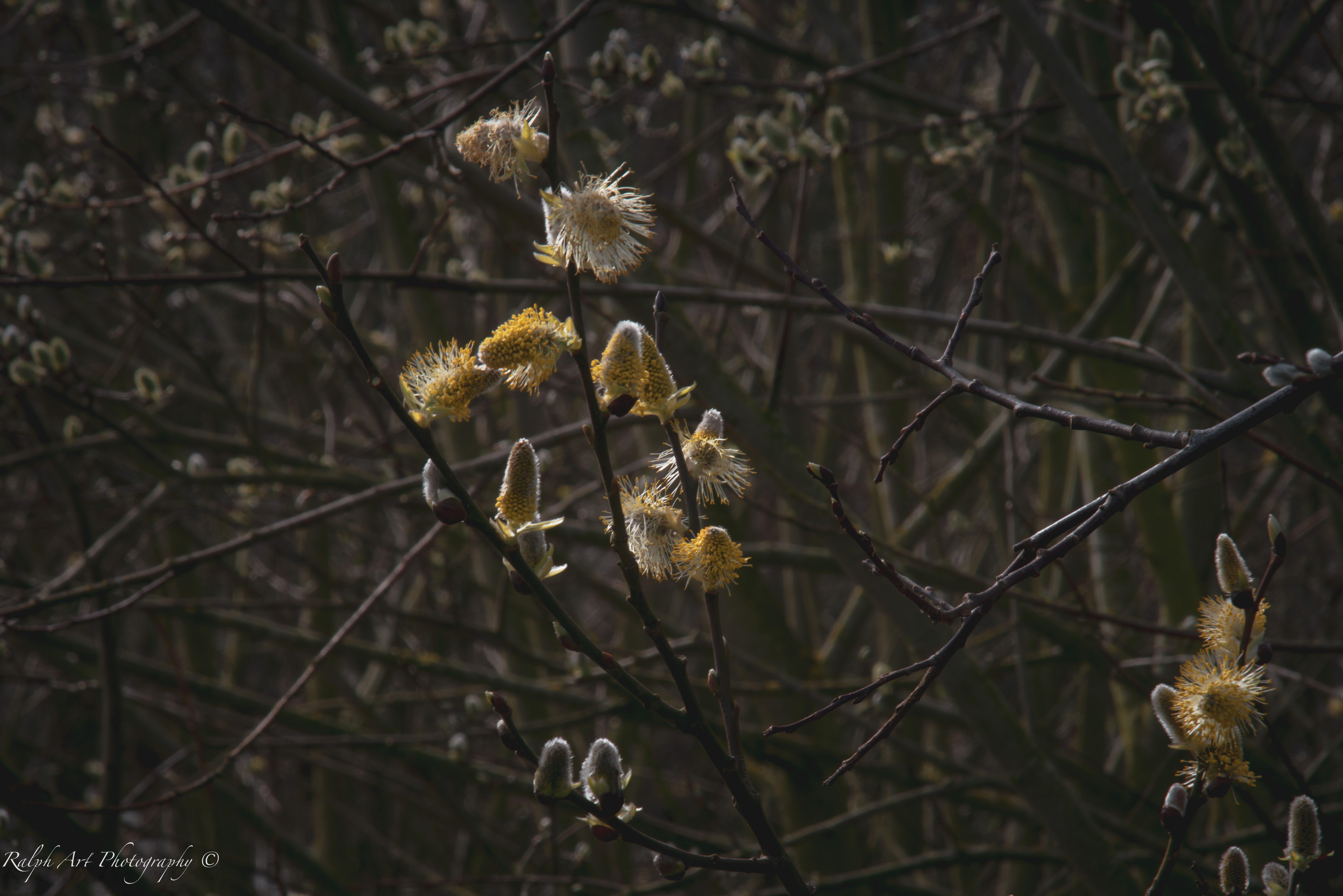 #spring #flowerpower