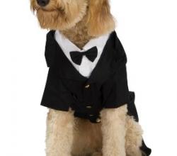 Dapper Dog Tuxedo X-Large Pet Costume | Halloween Costumes ...