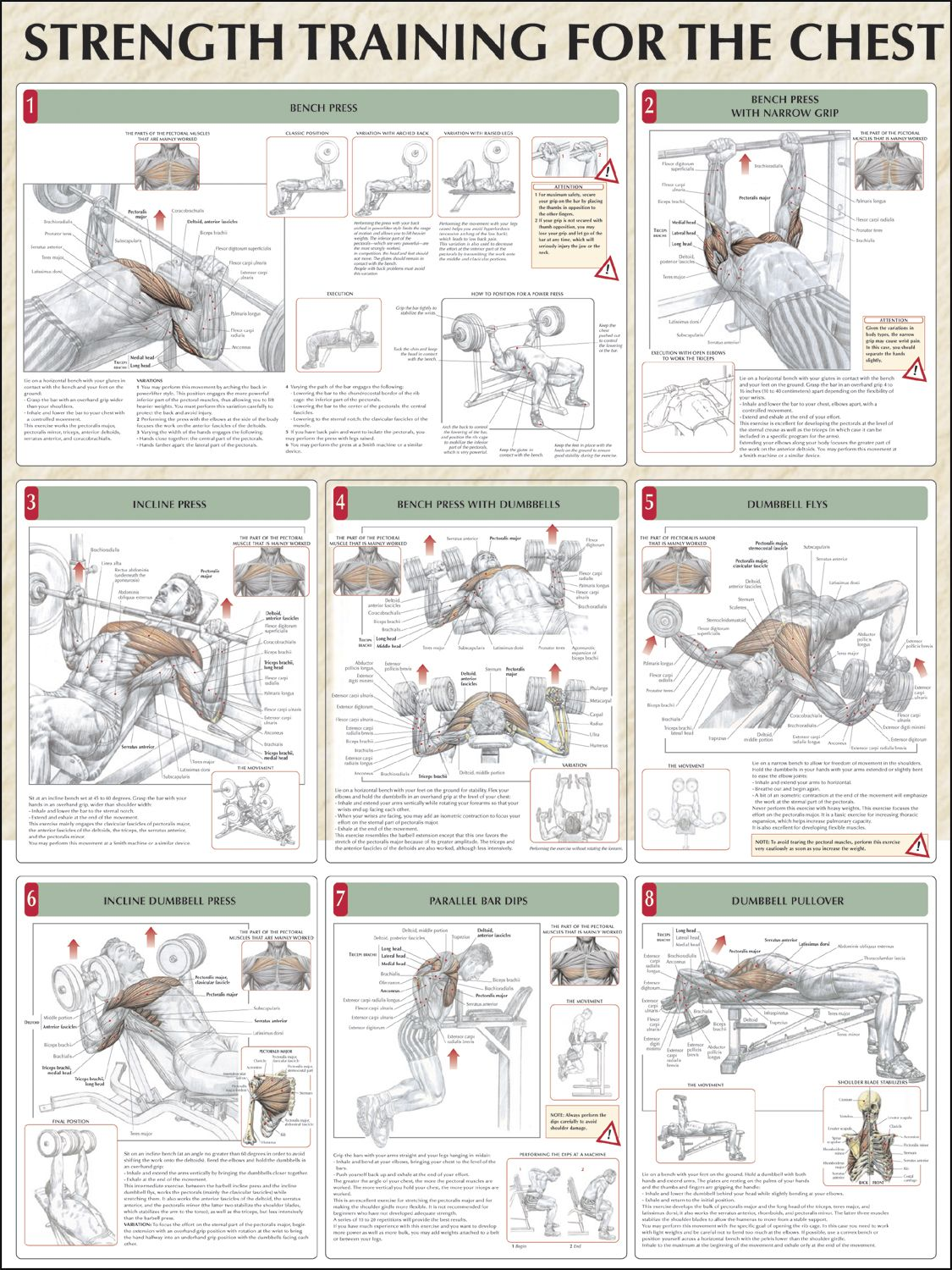 All Chest Workouts  | body power | Chest workouts, Strength