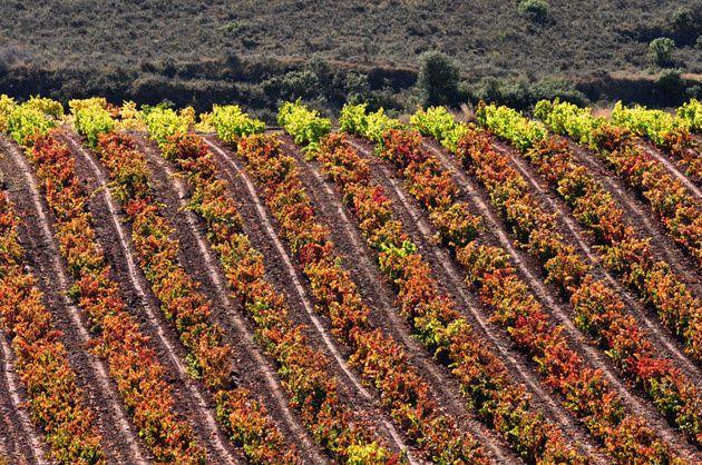 Pin En La Rioja