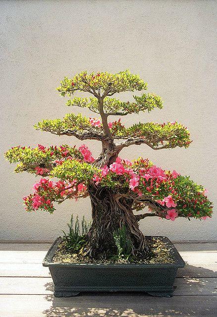 Bonsái│Árboles - #Trees - #Bonsai                                                                                                                                                                                 Más