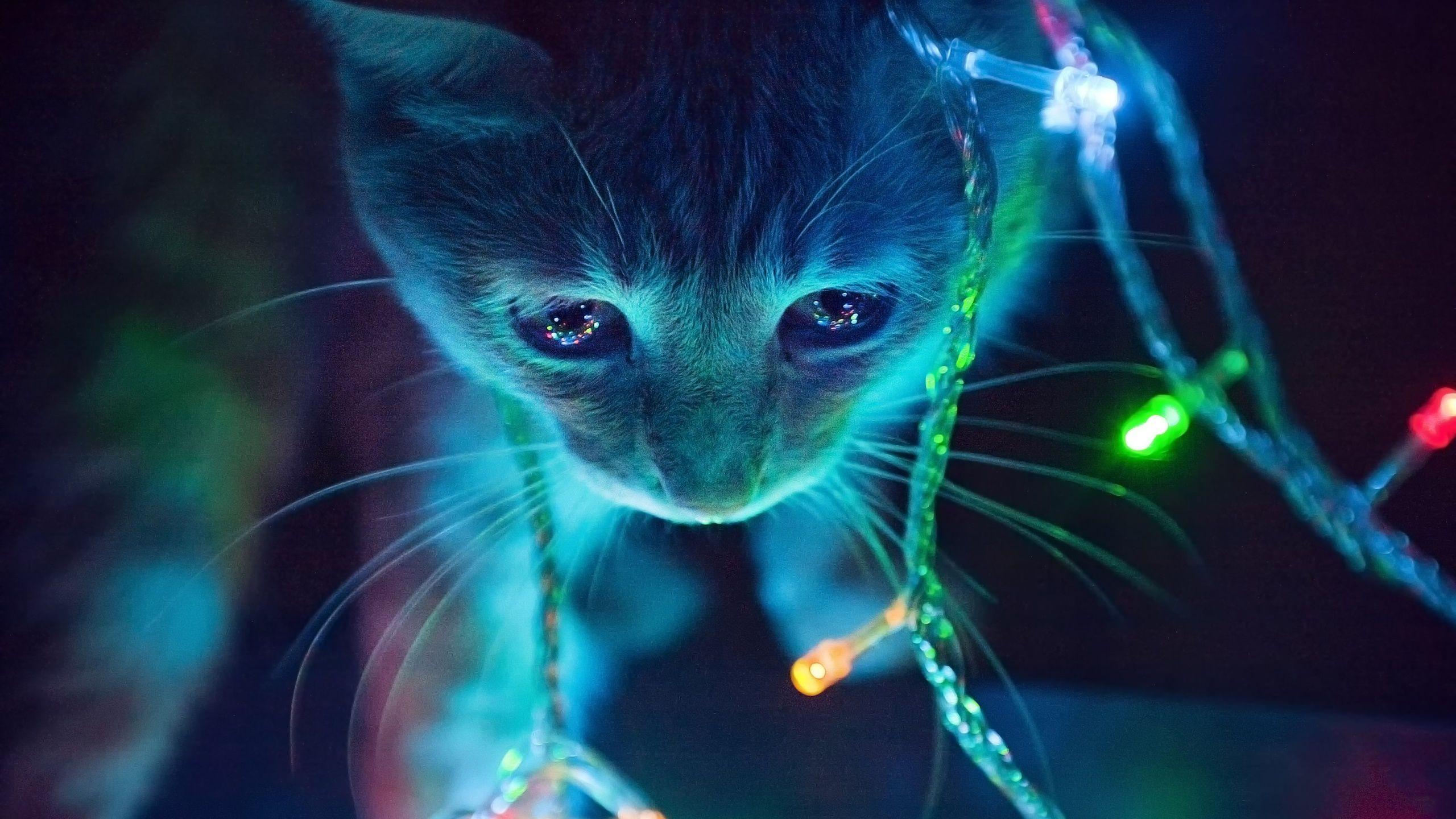Wallpaper Baby Kitten Mit Bildern Katzen Tapeten Susseste Haustiere Ausgestopftes Tier