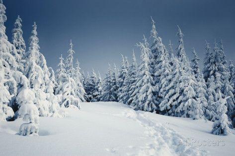 Winter Landscape Kuvia tekijänä Kotenko AllPosters.fi-sivustossa