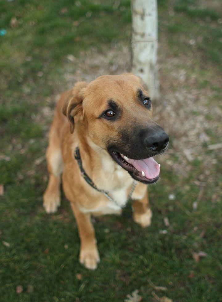 Pin by Dr. Godfrey Lambwell on Domestic Dog German