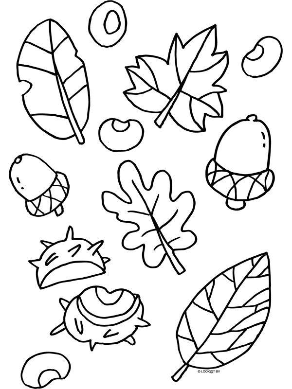 kleurplaat herfst blaadjes nootjes kleurplaten nl