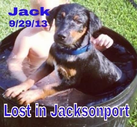 Pin By Us Lost Dog Registry On Us Lost Dog Registry Losing A Dog Puppies Rottweiler