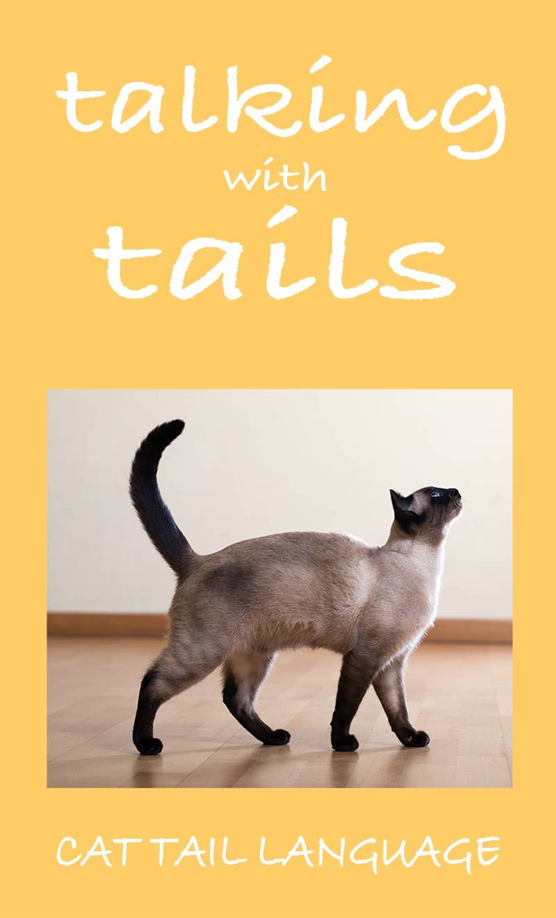 Why Do Cats Wag Their Tails A Guide To Cat Tail Language Cat Tail Language Cat Site Cat Tail