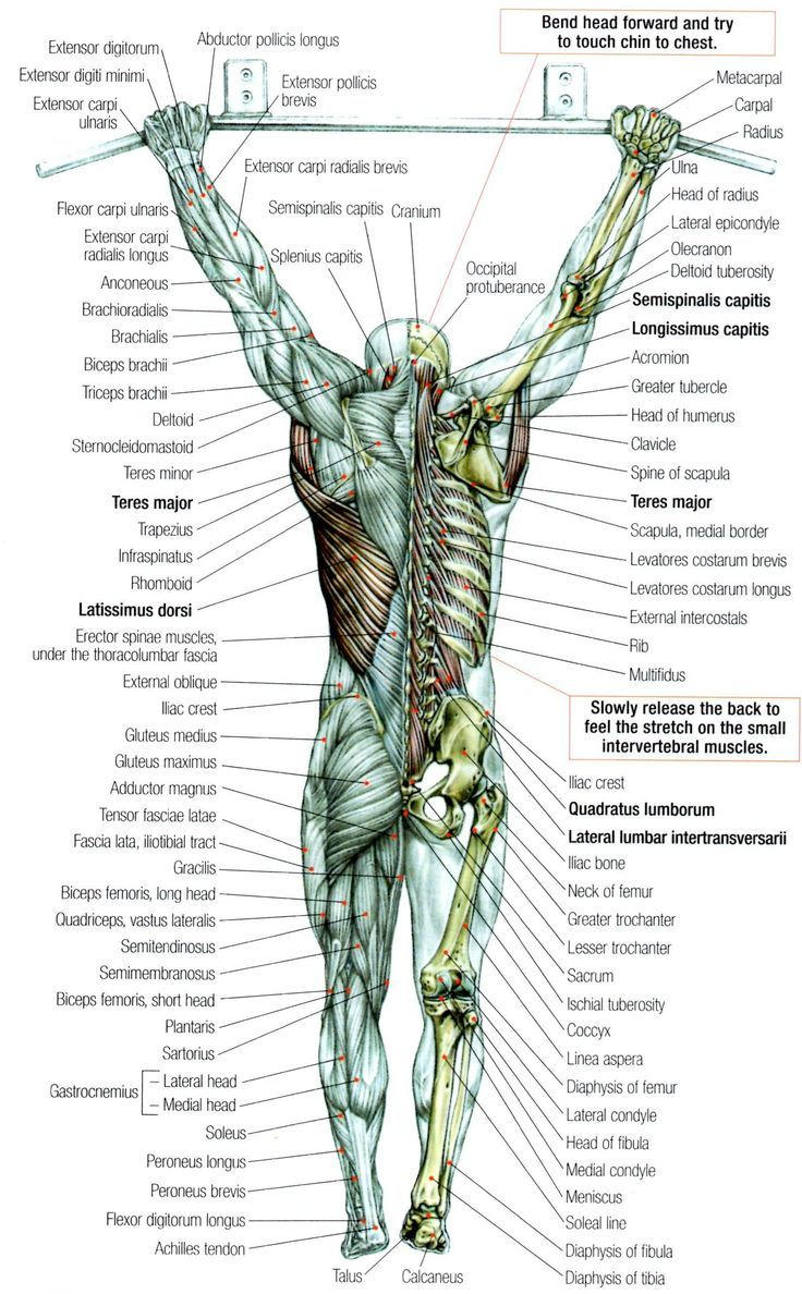 pullup | Pullups with muscles | Pinterest | Anatomy, Workout and ...