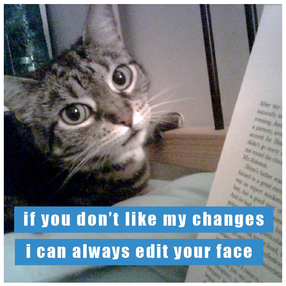 Edit Your Face Funny cat captions, Cat quotes