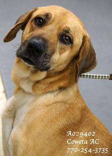 A 20 Sweet Ida029402 A 20 Extremely Urgent Retriever Shep Mix Female 5 Years The Second You Meet This Wonderful Lady Yo Dog Adoption Petsmart Dog Adoption