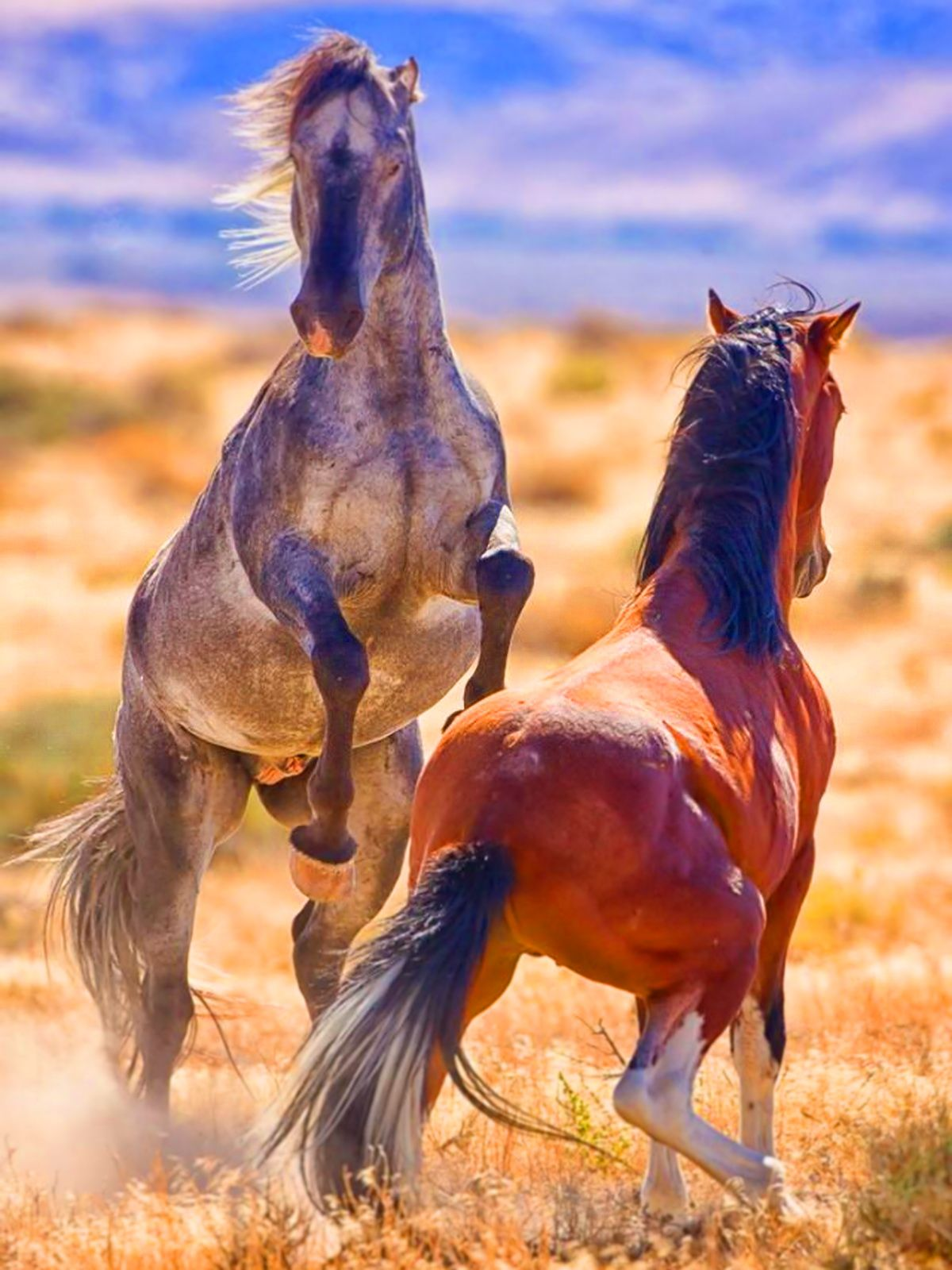 Fighting of its own kind   arte   Pinterest   Caballos, Animales y ...
