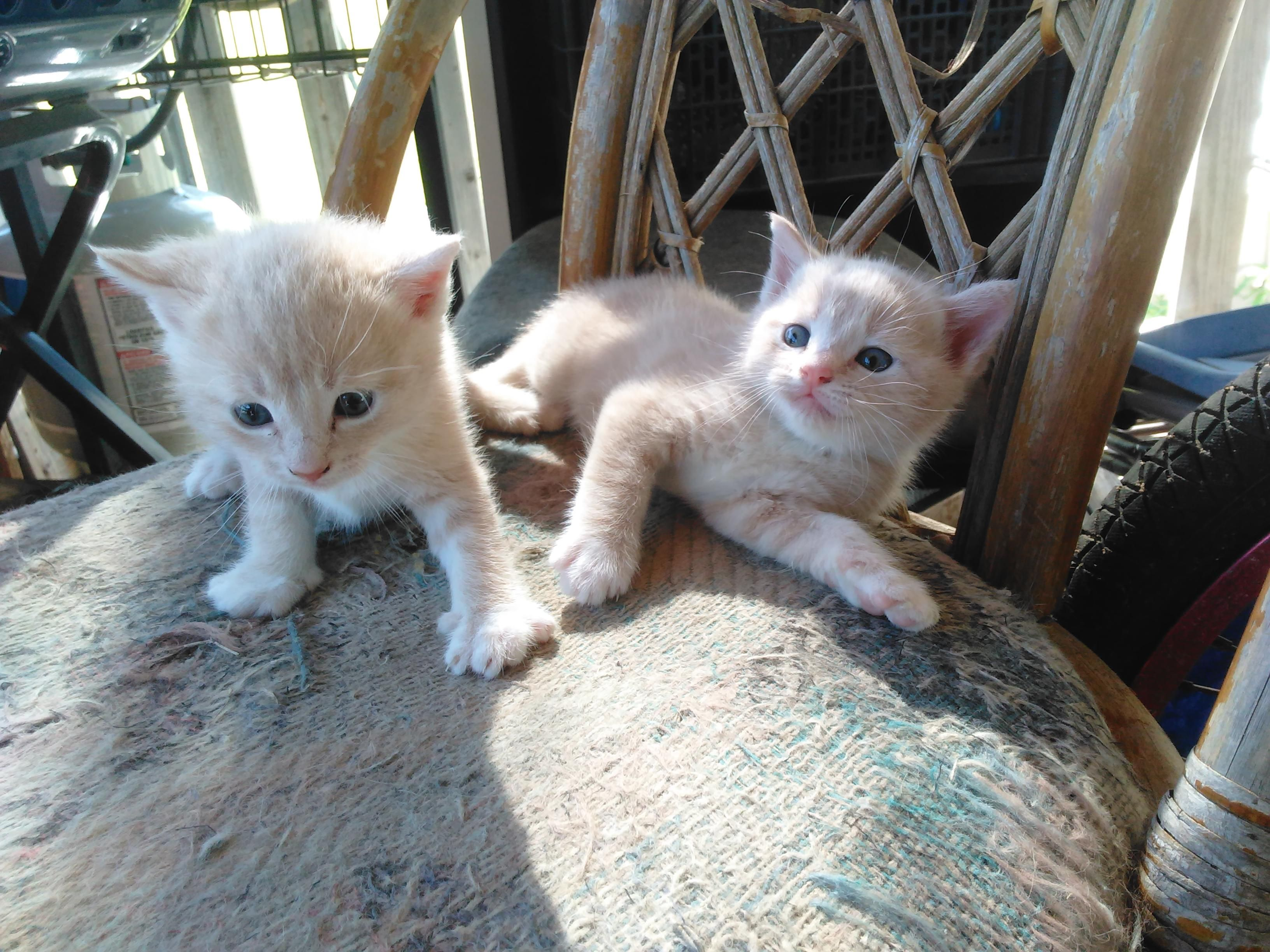 New kittens! They are twin boys named Jack / Light. http