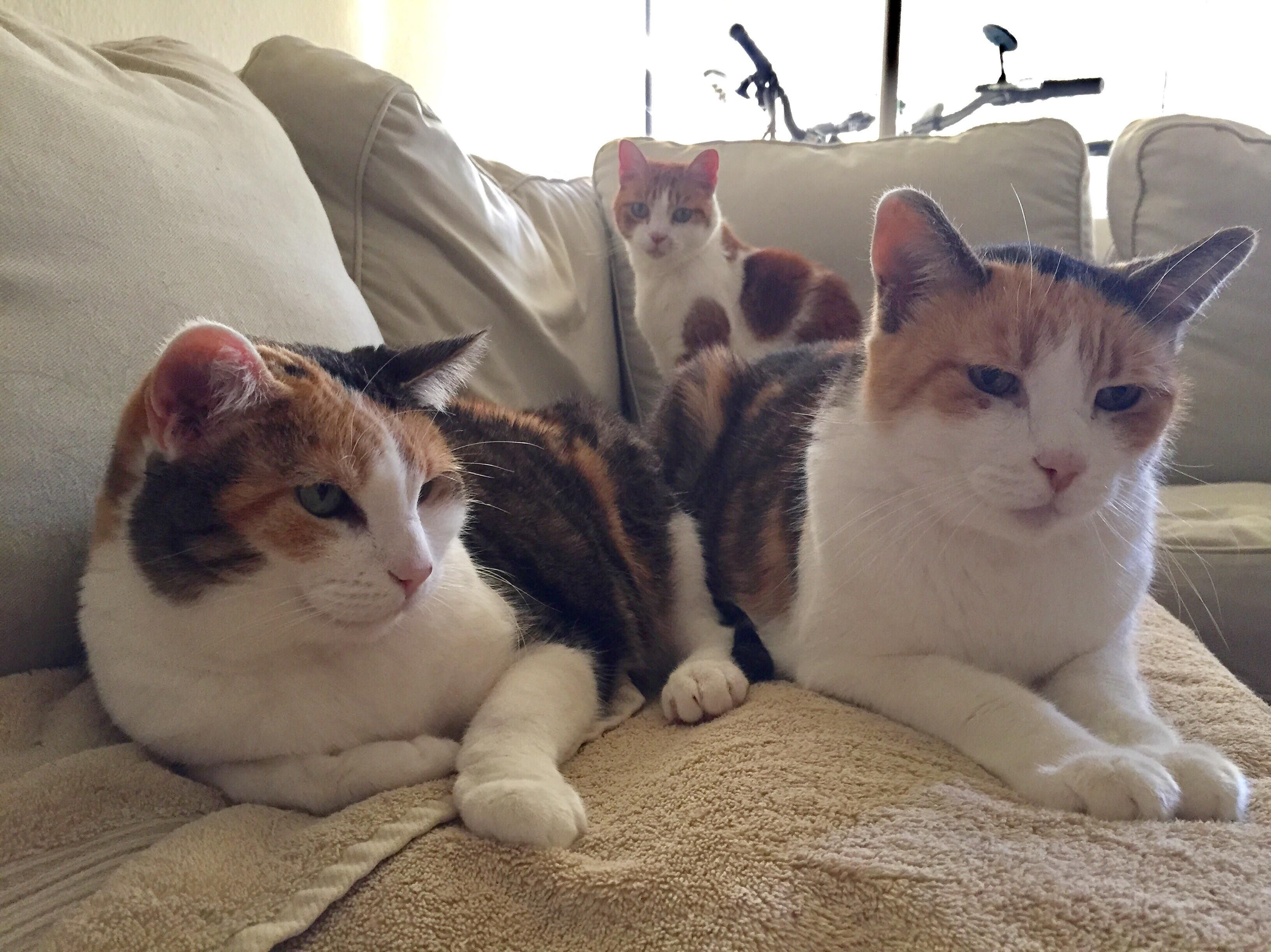 My three crazy cats: Charlie & Angel (females 17) and Billy (male 8) in the background http://ift.tt/2mhIM05