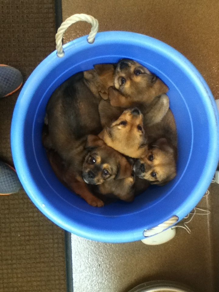 A Bucket Of Puppies Just Showed Up To My Job Cute Little