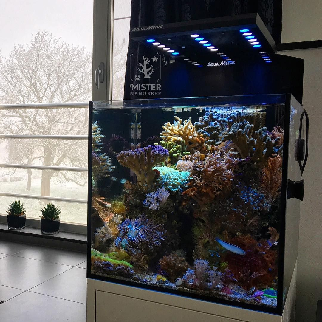Year 3 Day 43 Let It Snow Nanoreef Marineaquarium Eatsleepreef Reefaddict Reefpicoftheday Reefpack Marine Aquarium Tropical Fish Saltwater Aquarium