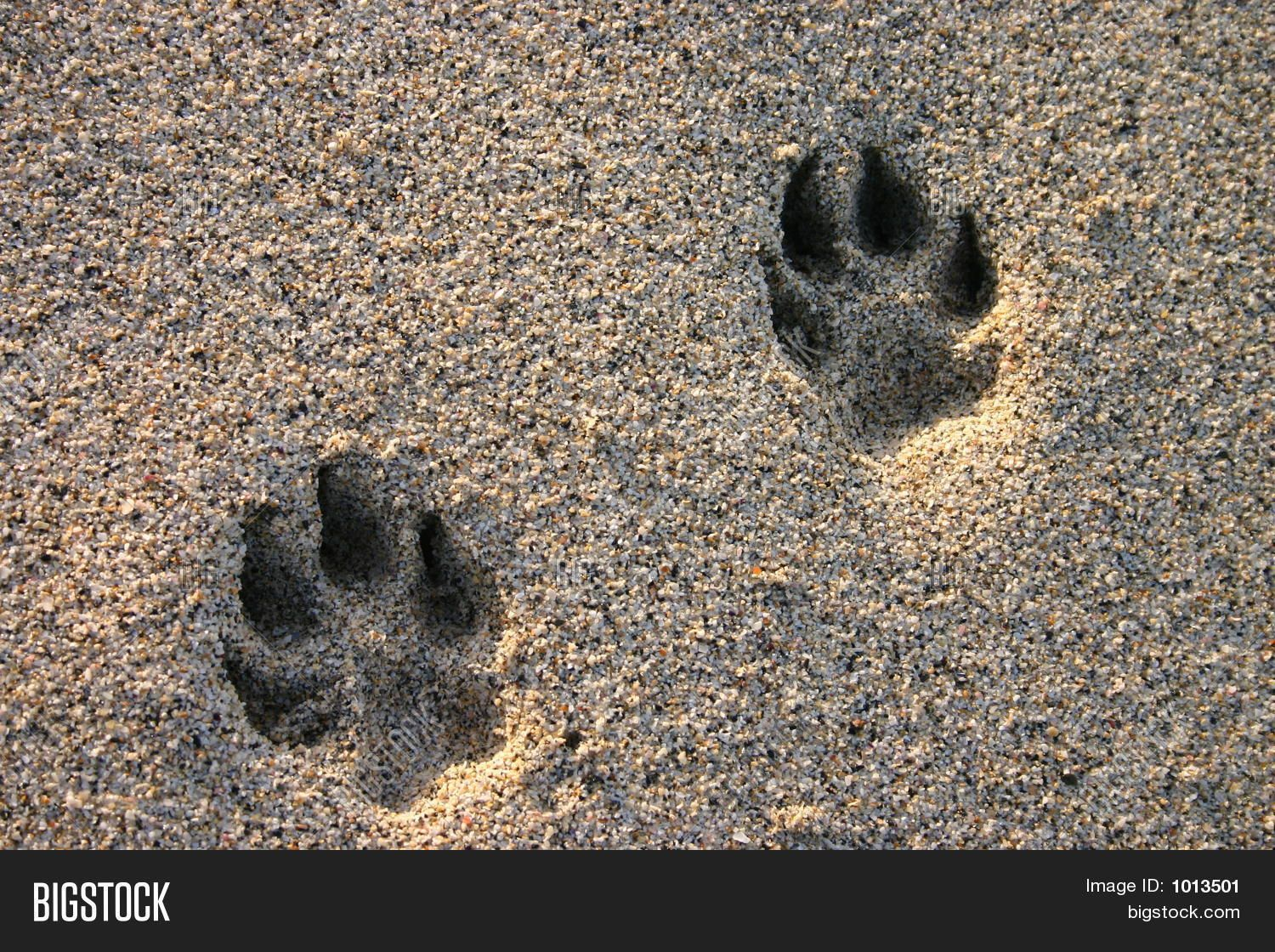 0d89090e7 Dog Paw Prints In The Beach Sand