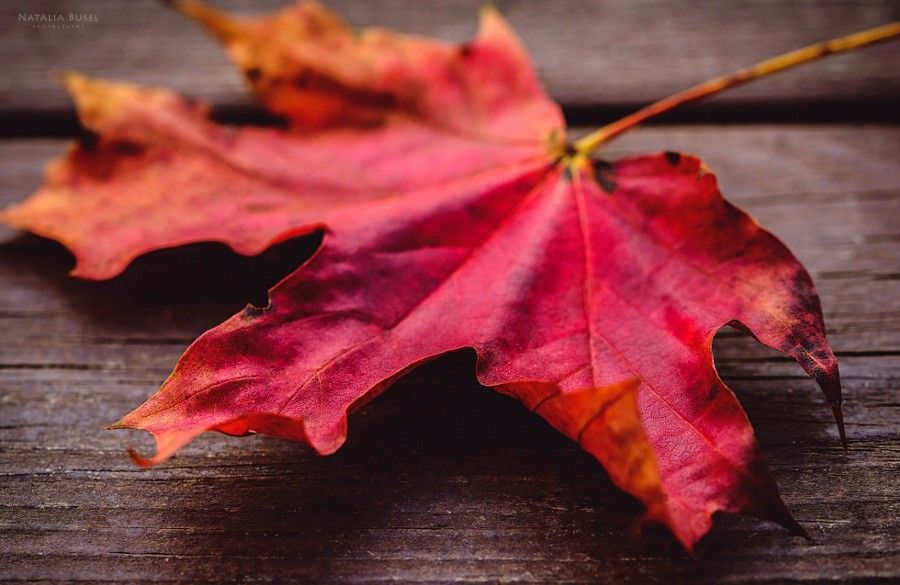 Autumn by Natasha Busel