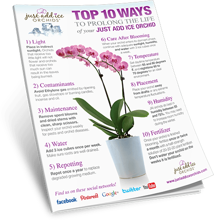 10 Simple Steps Orchid Health Orchids Phalaenopsis Orchid Care Repotting Orchids