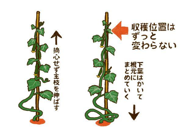 ボード 野菜の作り方 のピン