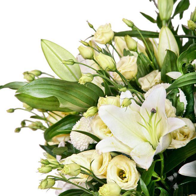 Сажать ли проросшие лилии 67