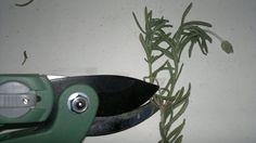 Cómo hacer esquejes para multiplicar tus plantas - Blogs lanacion.com
