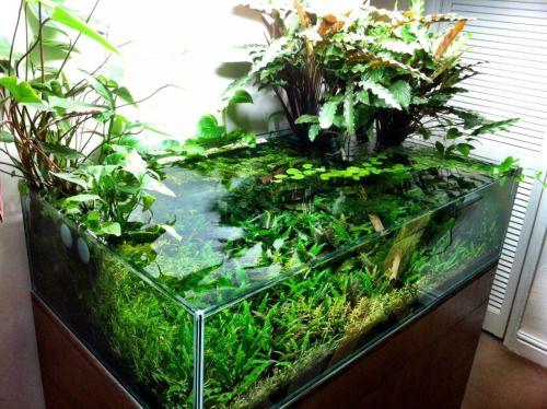 Pin de Bob en Fish / Aquarium / Pond Pinterest Acuario, Peceras