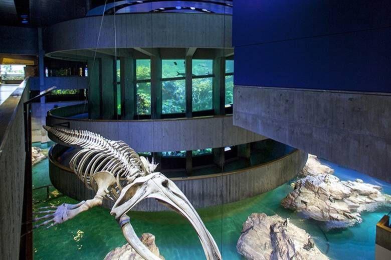 Boston's Top 10 Attractions | New england aquarium ...