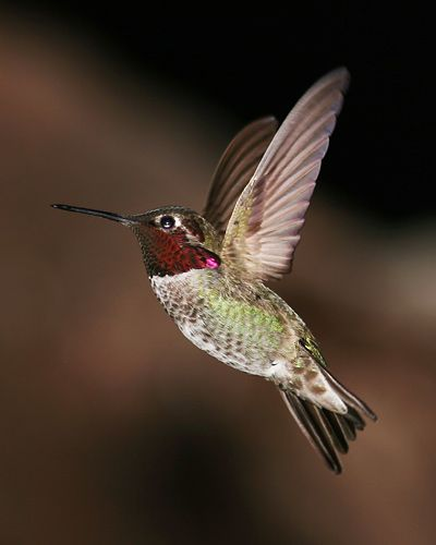 There's nothing like having a hummingbird around the house (outside of course) to liven things up.