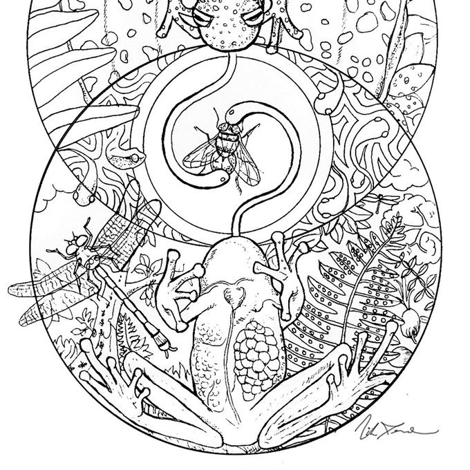 Ecuadorian Glass Frog Art From Last Chance Earth Endangered Species Coloring Book Now On Kickstarter Glassfrog Animal Coloring Books Frog Art Coloring Books