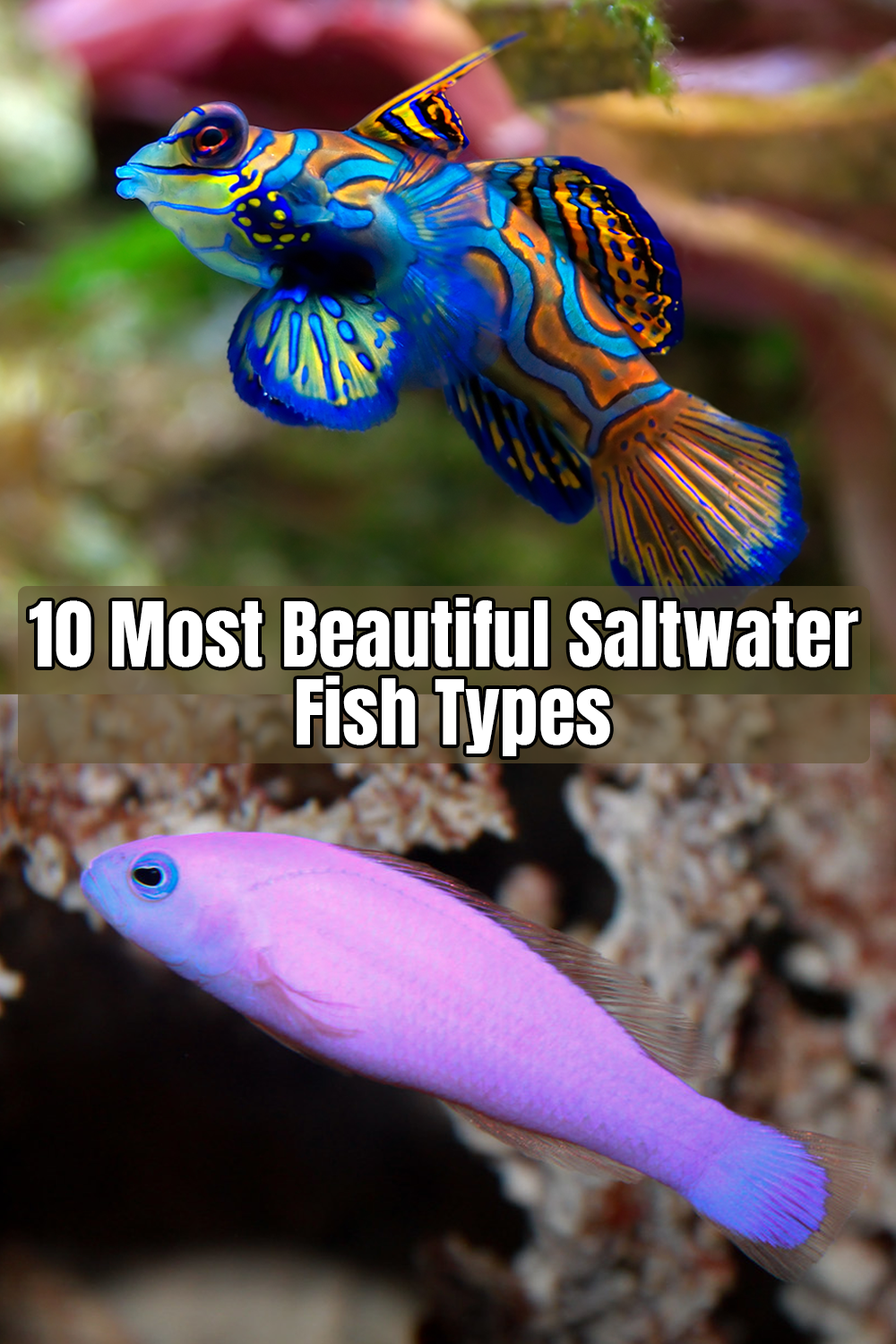 10 Most Beautiful Saltwater Fish Types Saltwater Aquarium Fish Saltwater Fish Tanks Marine Aquarium Fish