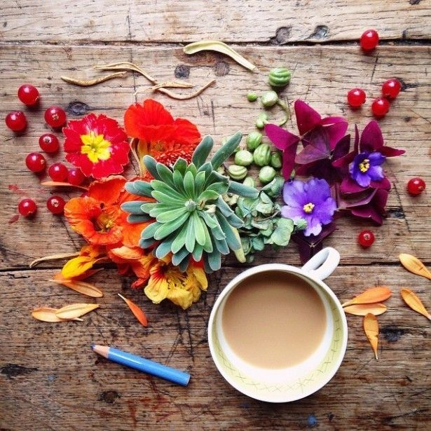 Хочешь творить - твори -   Цветы из полисадника, горсть карандашей, полчашки какао и телефон - вот и всё, что нужно для создания популярного сайта с красивыми фотографиями. Проверено Филиппой Стентон.  #фотограф #творчество #цветы #photographer #art #flowers