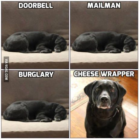 Pretty well sums up the security my dog provides