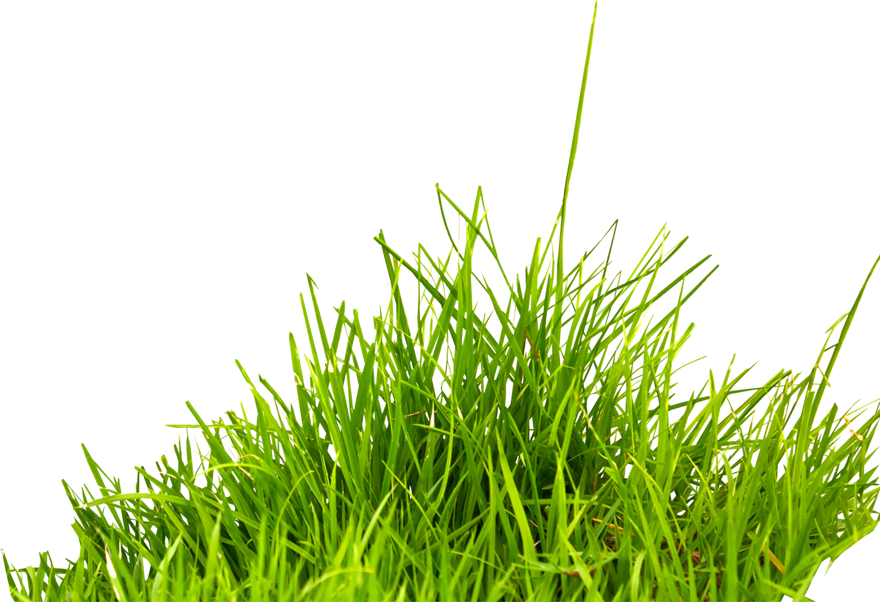 grass png image, green grass PNG picture Picsart png