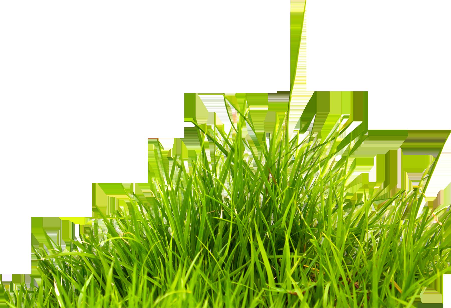 Grass Png Image Green Grass Png Picture Grass Photoshop Grass Picsart Png