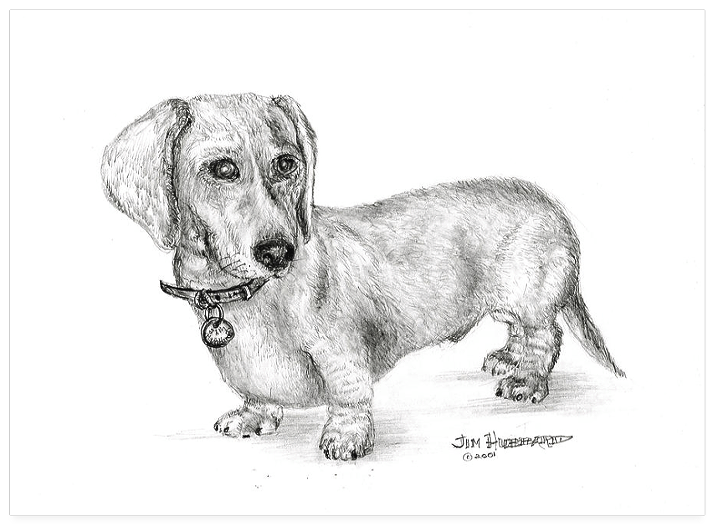 Adorable Doxie Drawing Dachshund Sketch Dachshund Drawing Dachshund Love