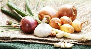 Zwiebel Sorten - Arten & Unterschiede