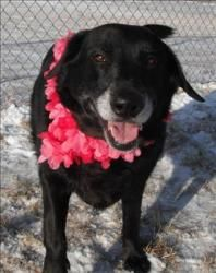 Missy A Beautiful 6 Year Old Gsd At Animal Allies In Duluth Mn Owner Surrender Lost His Home Calm Sweet And Gentle Animals Gsd Rescue