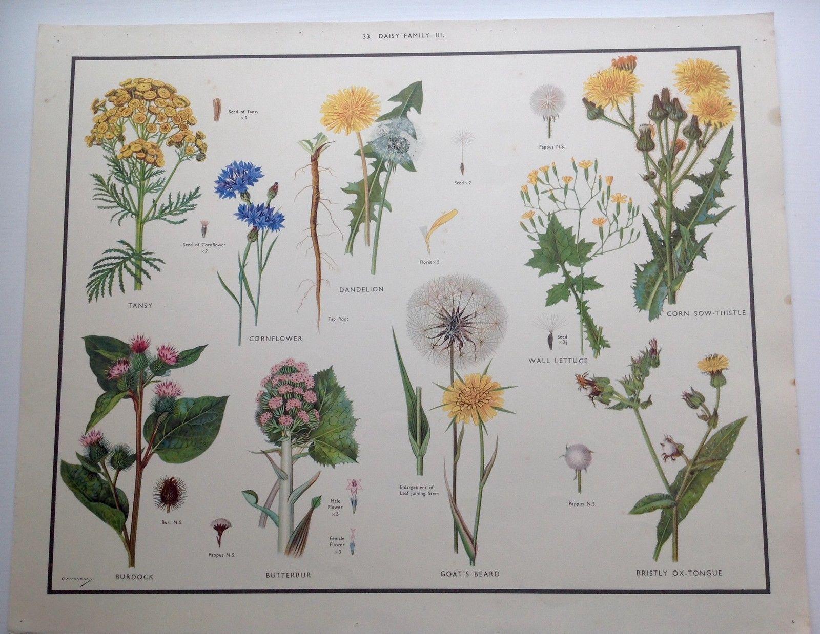 Macmillan Vintage School Educational Nature Botany