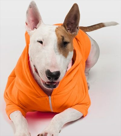 Fleece Doggie Hoodie Multiple Colors Sizes Dog Park Publishing Bull Terrier Dog Hoodie Bull Terrier Dog