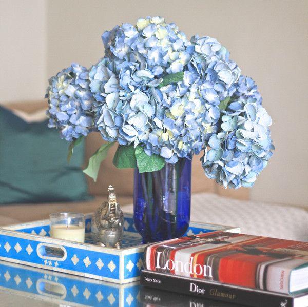 Pin By Brandon Hughes On Amaranthine Blooms Lace Cap Hydrangea Blue Hydrangea Hydrangea