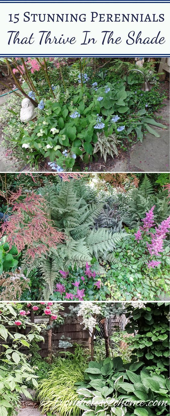 15 Stunning Perennial Ground Cover Plants That Thrive In