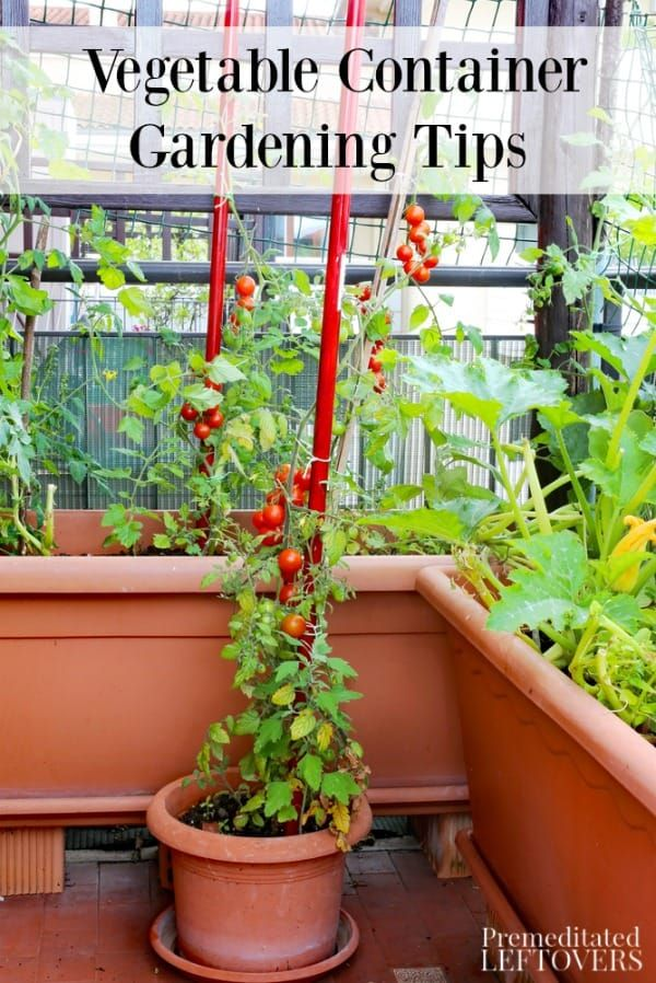 Tips On Vegetable Container Gardening Including Container 400 x 300
