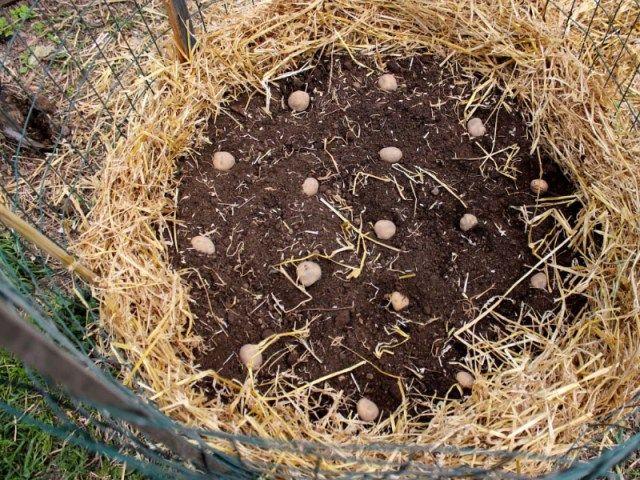 rendements records avec la tour pommes de terre pinterest permaculture gardens and planters. Black Bedroom Furniture Sets. Home Design Ideas