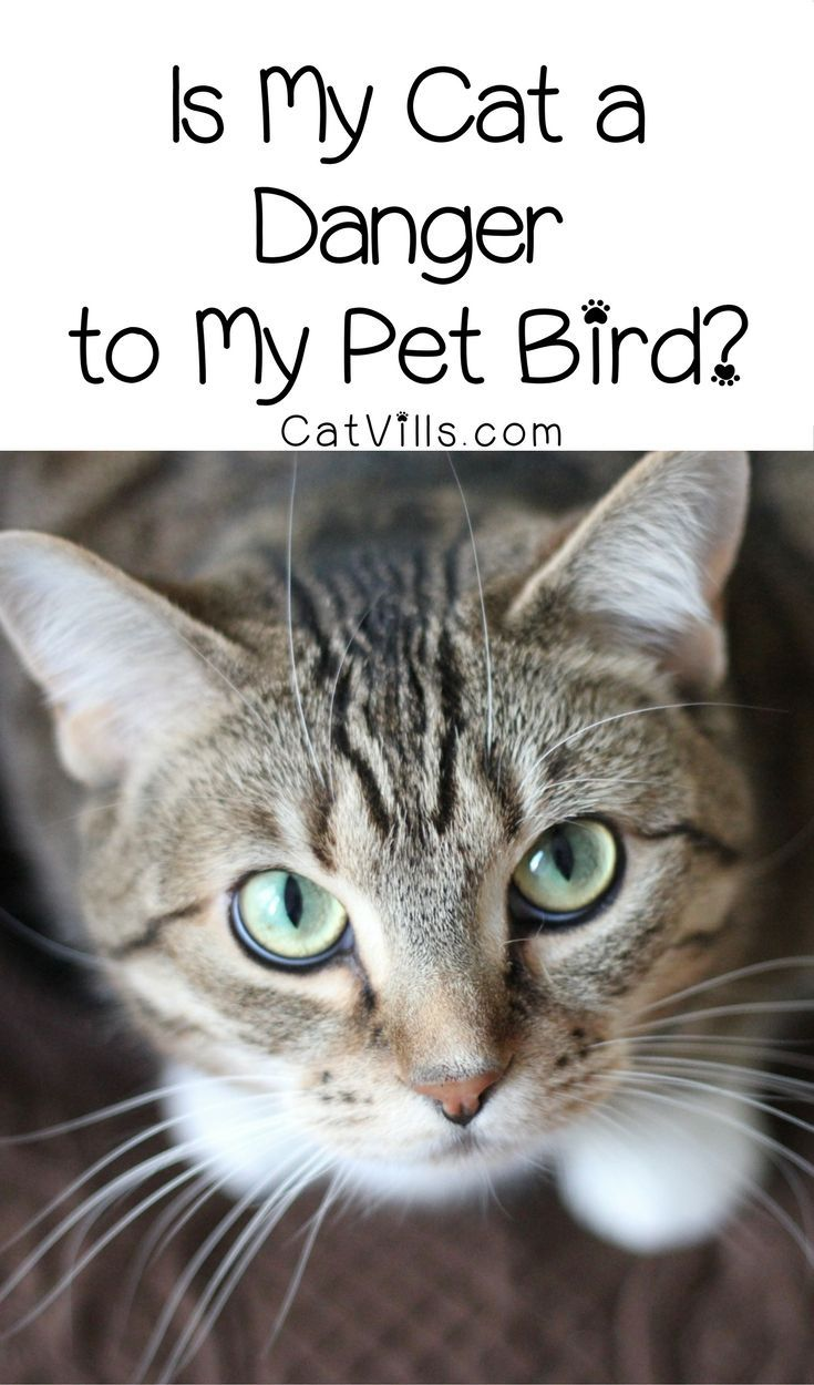 Cats and Birds Can They Live Together in Harmony? Pets